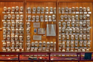 The Hyrtl Skull Collection